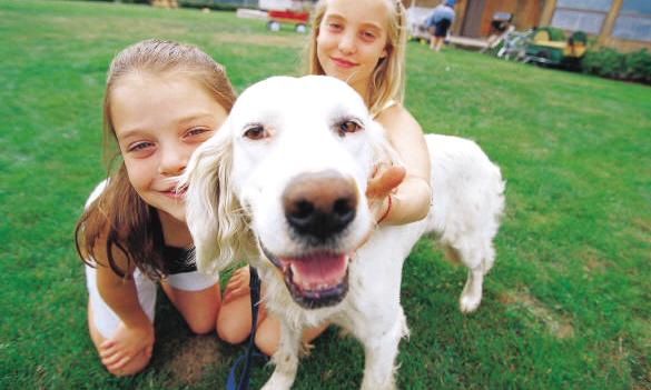 Корм для собак и кошек CANIDAE